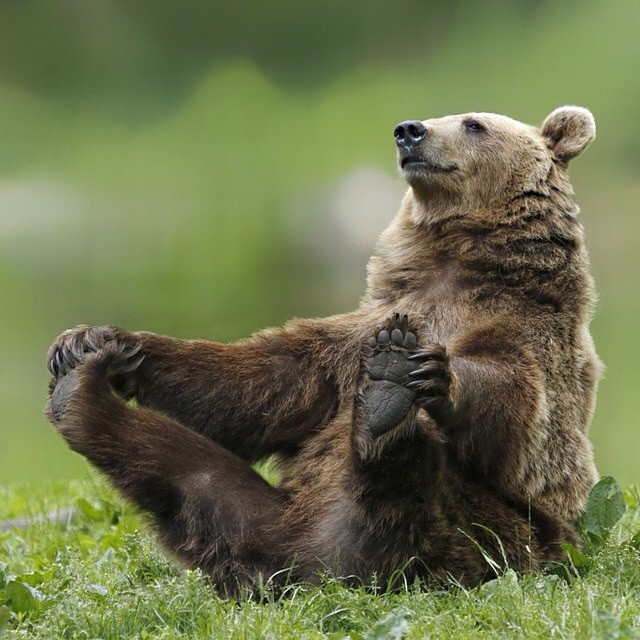 Bear Watching Romania funny brown bear