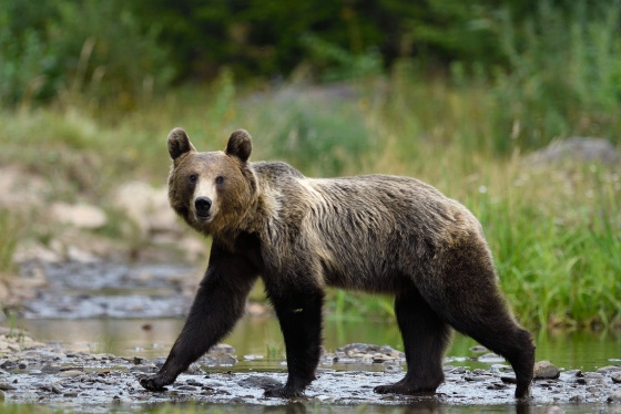 When To See Bears in Romania