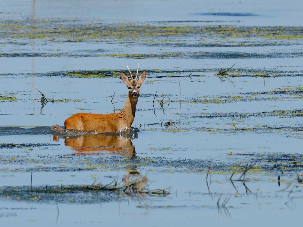 Danube Delta Wildlife Watching