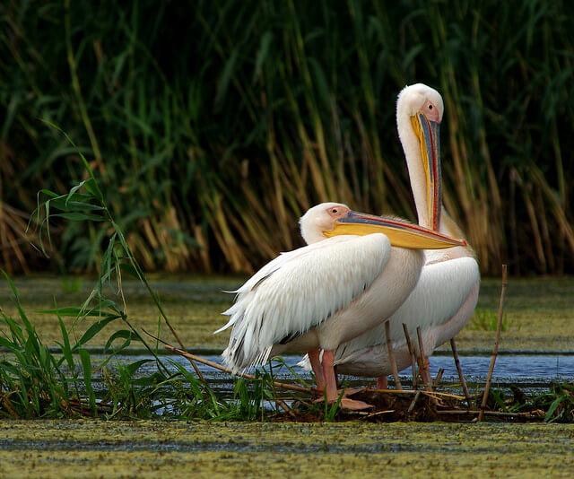 Danube Delta Holidays