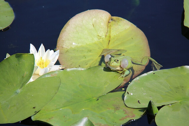 best time to visit Danube Delta water lilies