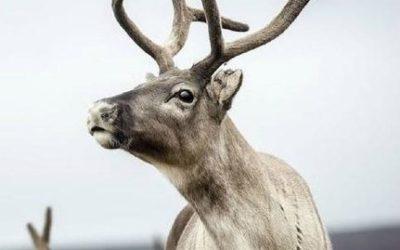 European Animals: Unique & Wild