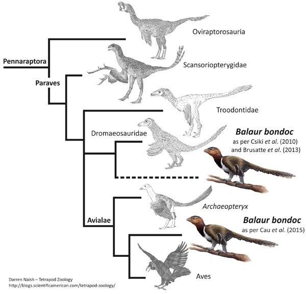 Balaur Bondoc cladogram