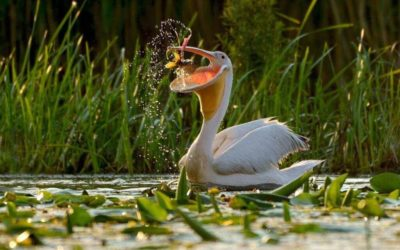 Danube Delta Tours for All