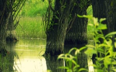 Letea Forest | A Fairy Tale Place